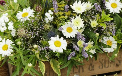 Kent County Show a must for gardeners