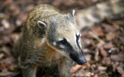 Animal Adventure launches at London Zoo
