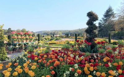 Trentham's Spring Bulb Festival set to be a sweet-smelling success