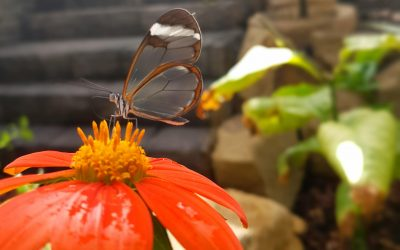 Attraction set to flutter into view…