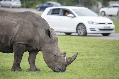 Help support the rhinos at WMSP